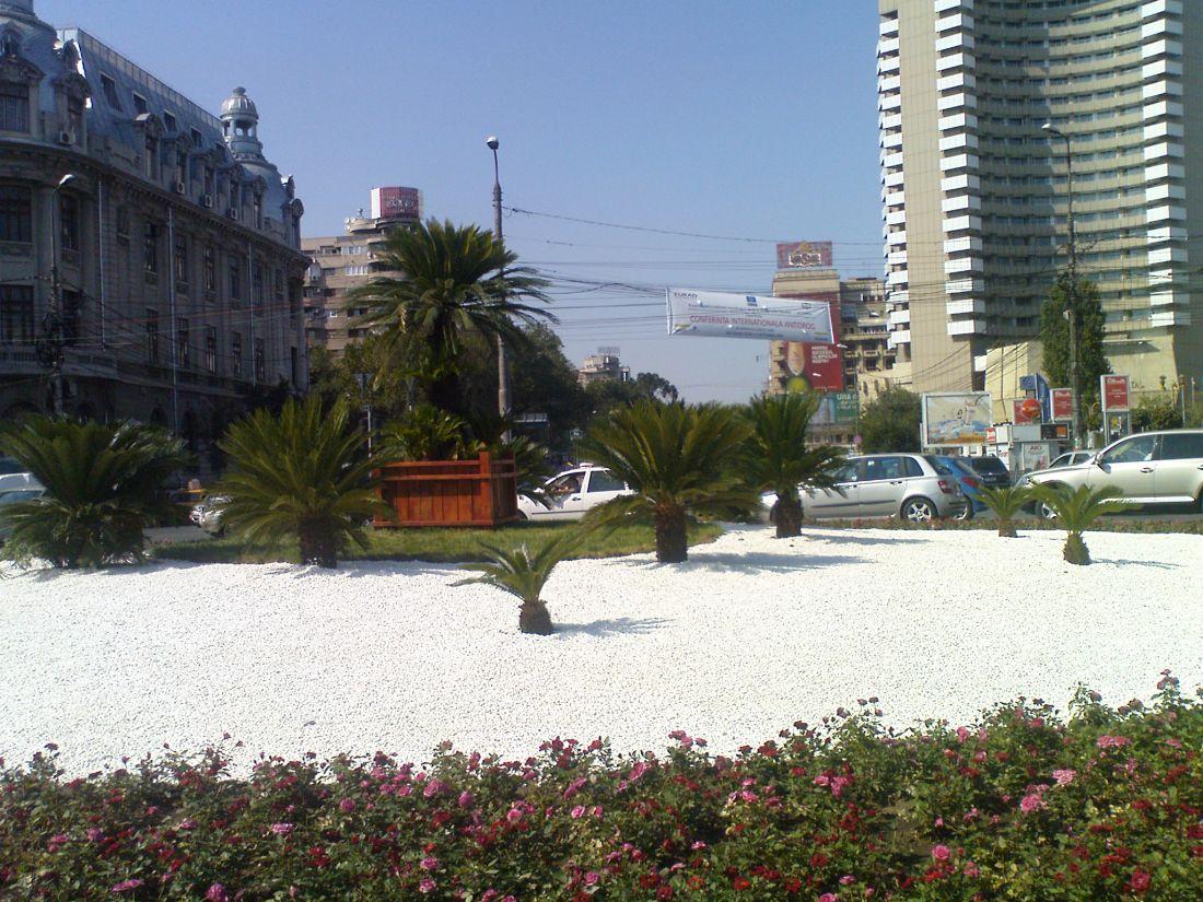 palmieri3