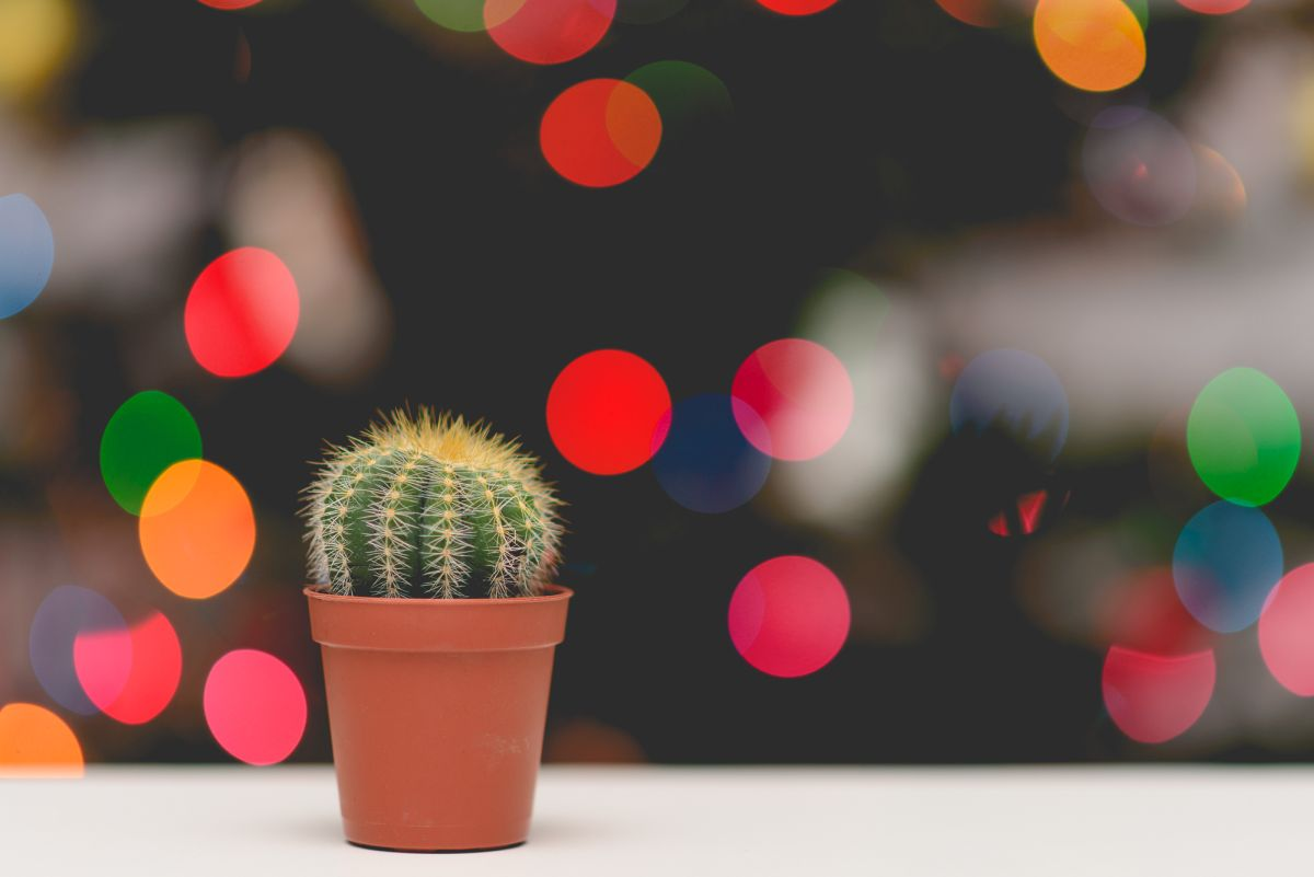 christmas-tree-tree-lights-cactus-76081